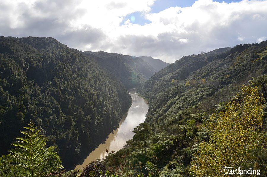 carretera-nueva-zelanda