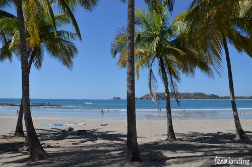 playa-carrillo-palmeras