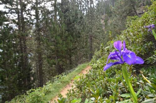 flores ordesa