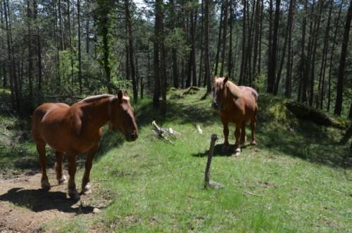 caballos ruta