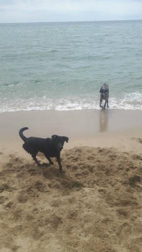 la robina playa perros