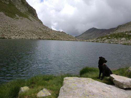 rutas con perro pirineo (1)