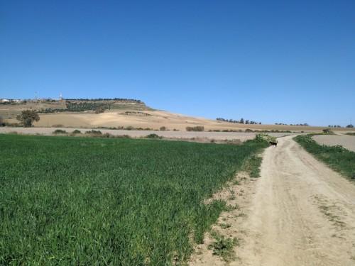 ruta campos cultivo la vega