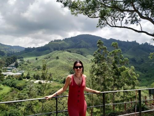 campos de te malasia