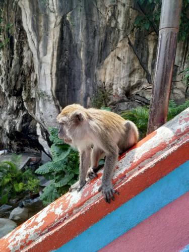 monos batu caves