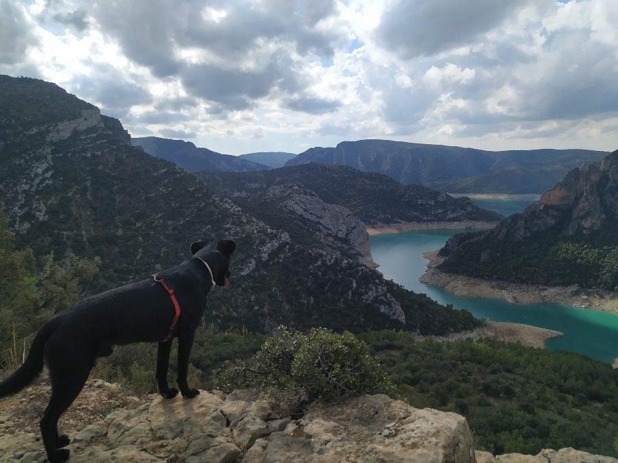 ruta senderismo con perro