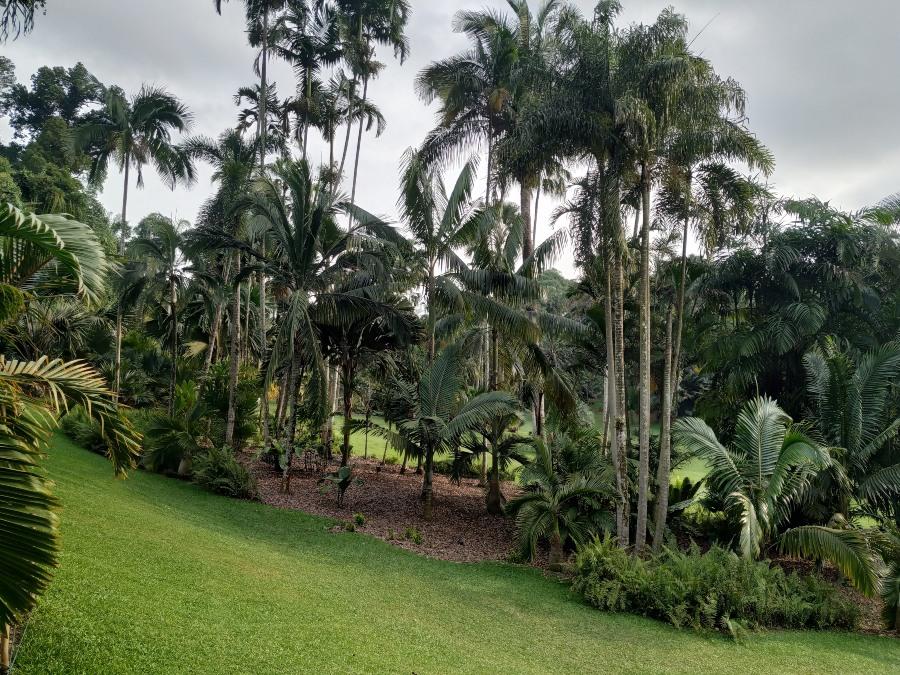 jardin botanico singapur