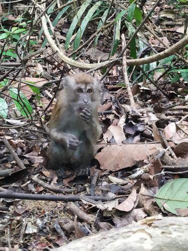 monos parque singapur