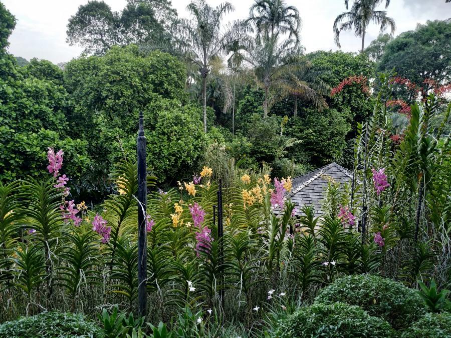 orquideas singapur
