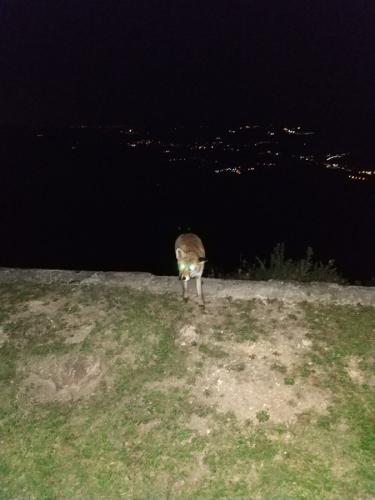 zorro asturias