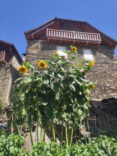 jardines bausen