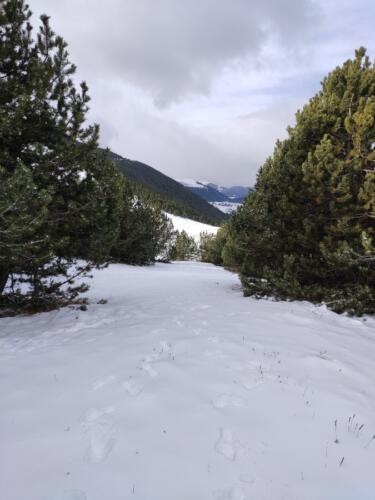 nevada montgrony