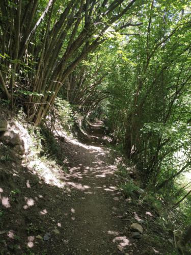ruta desde boi